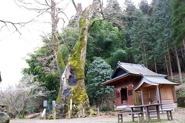竹の熊の大ケヤキ